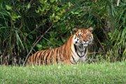 Mangrove Forest, Sundarbans, Bangladesh